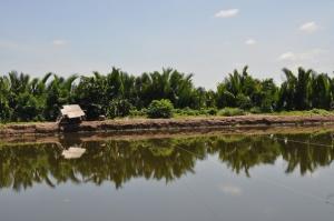 Pousse-Pousse est au Vietnam (5)